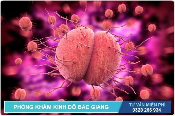 Bệnh lậu do vi khuẩn Neisseria gonorrhoeae